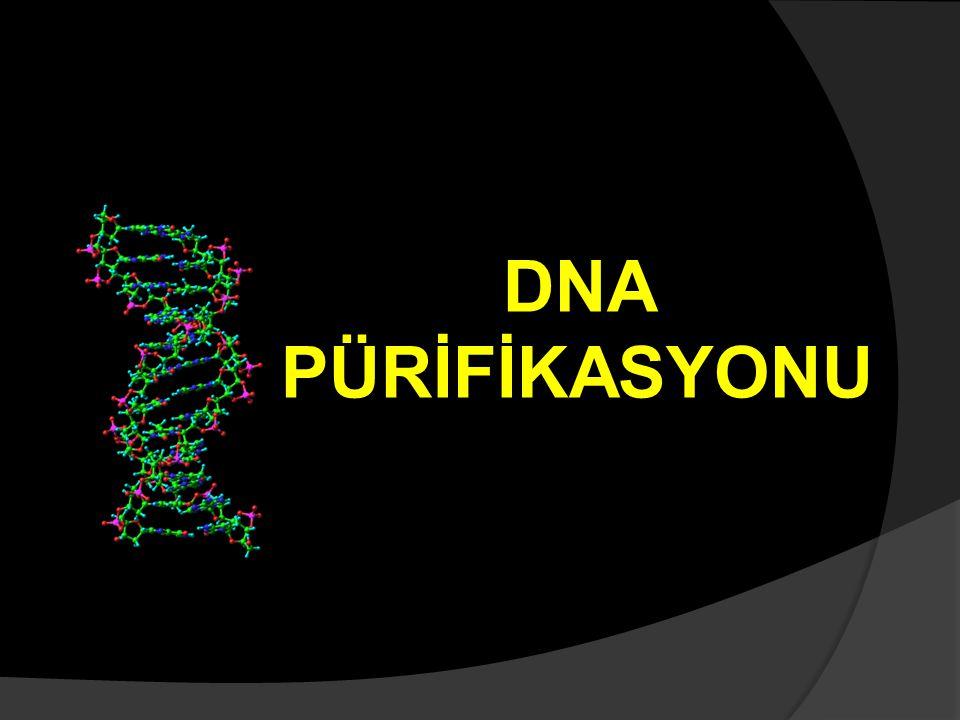 Organizma: E. coli, B. Subtilis Bakterilerden kromozom(genom) DNA'sı pürifikasyonu: