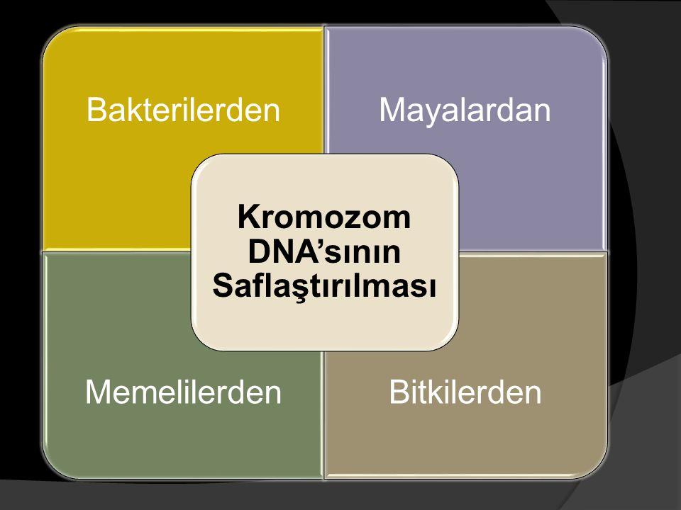BakterilerdenMayalardan MemelilerdenBitkilerden Kromozom DNA'sının Saflaştırılması
