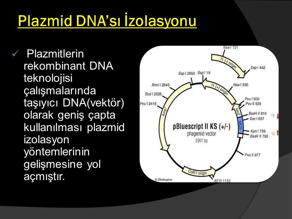 Plazmid DNA'sı İzolasyonu Plazmitlerin rekombinant DNA teknolojisi çalışmalarında taşıyıcı DNA(vektör) olarak geniş çapta kullanılması plazmid izolasy