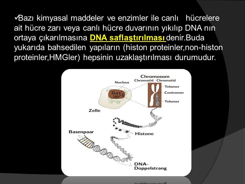 DNA PÜRİFİKASYON YÖNTEMLERİNDE BİRBİRİNİ İZLEYEN ÜÇ TEMEL AŞAMA BULUNMAKTADIR: 1- Hücrenin parçalanması ile yüksek molekül ağırlıklı DNA'nın açığa çıkması, 2-Denatürasyon veya proteoliz ile DNA-protein kompleksinin ayrılması ve DNA'nın çözünür duruma getirilmesi, 3-DNA'nın basit enzimatik ve/veya kimyasal yöntemlerle proteinler, RNA ve diğer makromoleküllerden ayrılması,