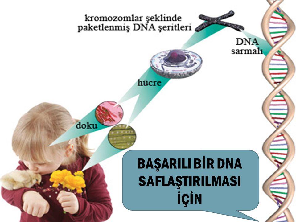 1-Hücresel organellerin açığa çıkması için hücre duvarı kırılmalıdır İlk aşama duvarın zayıflatılmasıdır.Fiziksel olarak dondurup çözme yada kimyasal maddeler kullanılarak yapılır.
