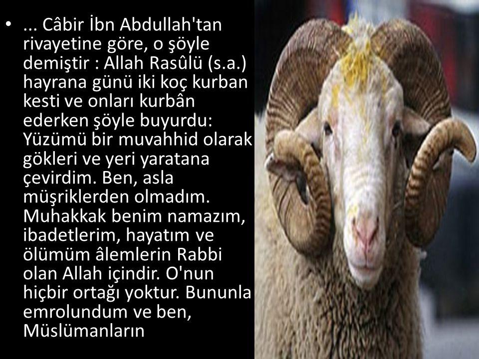 ... Câbir İbn Abdullah'tan rivayetine göre, o şöyle demiştir : Allah Rasûlü (s.a.) hayrana günü iki koç kurban kesti ve onları kurbân ederken şöyle b