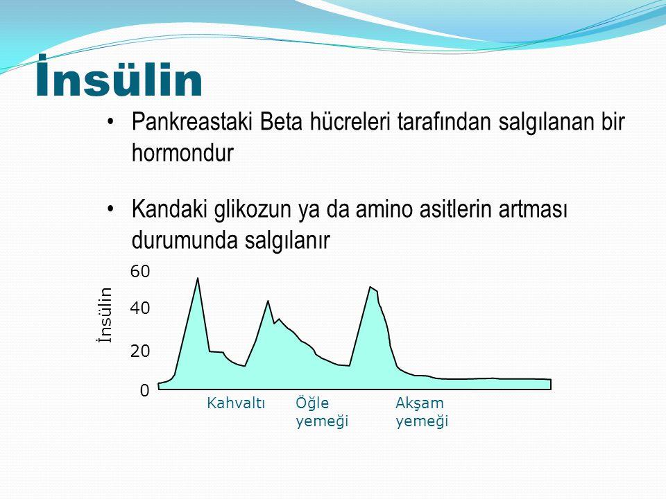 İnsülin Pankreastaki Beta hücreleri tarafından salgılanan bir hormondur Kandaki glikozun ya da amino asitlerin artması durumunda salgılanır İnsülin 60