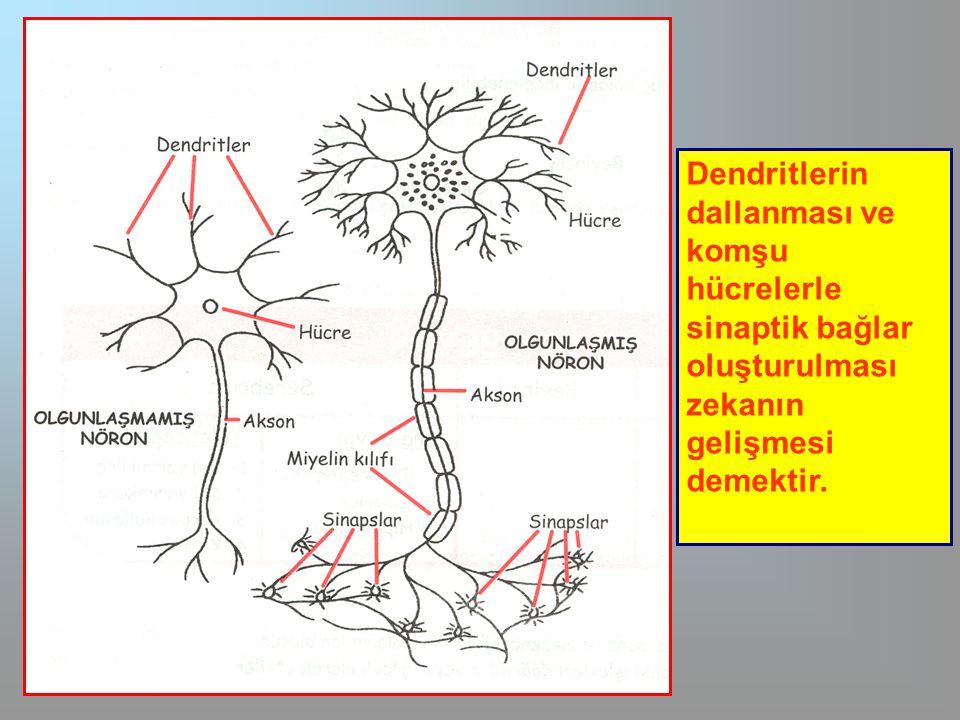 Beynin iki yarısı  Beynin hangi kısmı hangi tür zihinsel etkinlikleri yönetmektedir.