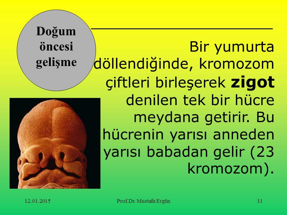 12.01.2015Prof.Dr. Mustafa Ergün11 Bir yumurta döllendiğinde, kromozom çiftleri birleşerek zigot denilen tek bir hücre meydana getirir. Bu hücrenin ya