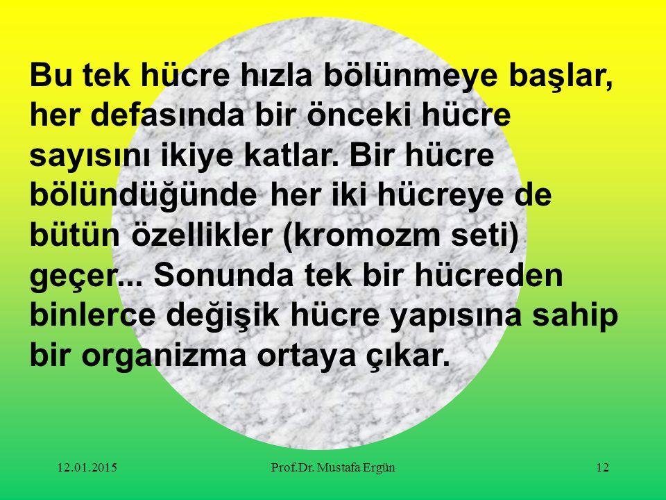 12.01.2015Prof.Dr. Mustafa Ergün12 Bu tek hücre hızla bölünmeye başlar, her defasında bir önceki hücre sayısını ikiye katlar. Bir hücre bölündüğünde h