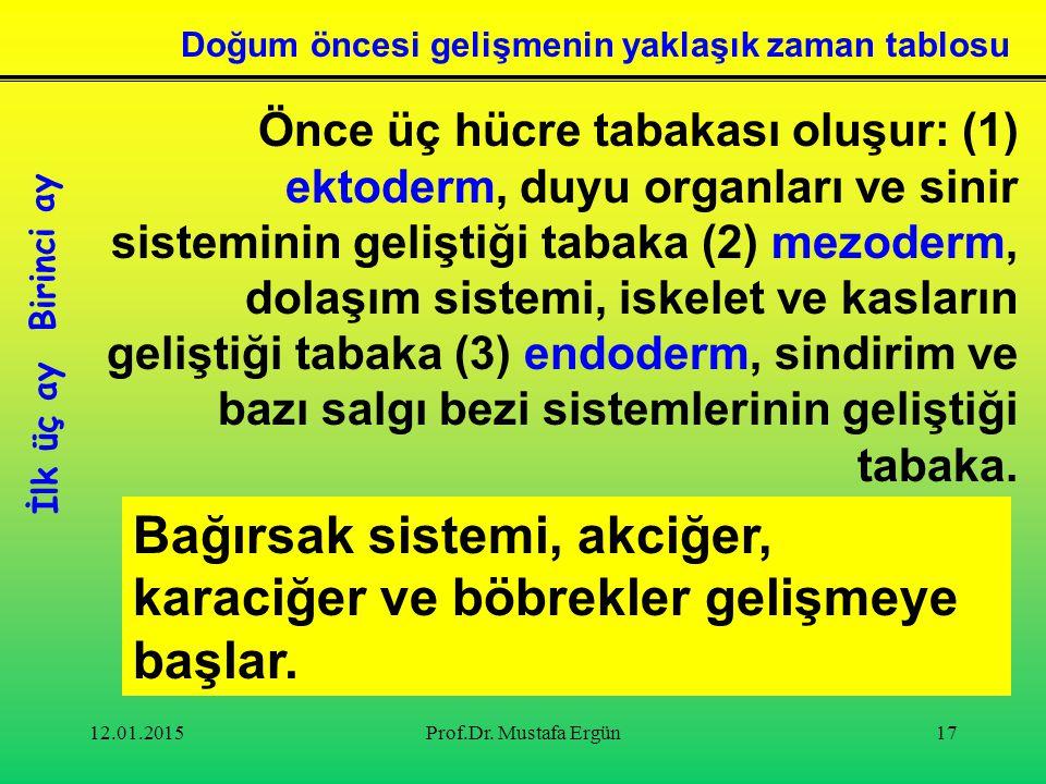 12.01.2015Prof.Dr. Mustafa Ergün17 Önce üç hücre tabakası oluşur: (1) ektoderm, duyu organları ve sinir sisteminin geliştiği tabaka (2) mezoderm, dola