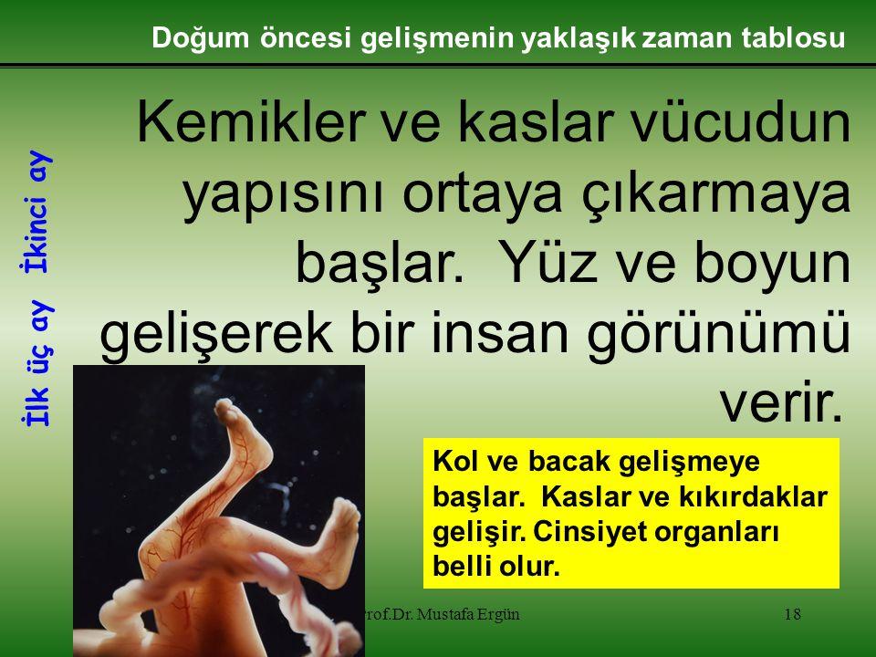 12.01.2015Prof.Dr. Mustafa Ergün18 Kemikler ve kaslar vücudun yapısını ortaya çıkarmaya başlar. Yüz ve boyun gelişerek bir insan görünümü verir. Kol v