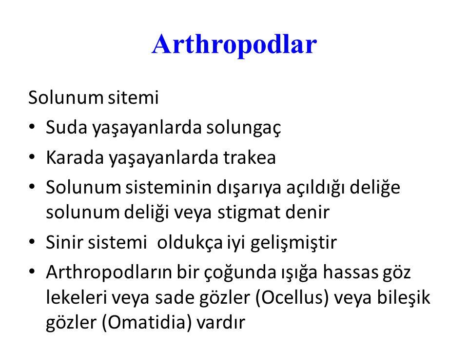 Arthropodlar Solunum sitemi Suda yaşayanlarda solungaç Karada yaşayanlarda trakea Solunum sisteminin dışarıya açıldığı deliğe solunum deliği veya stig