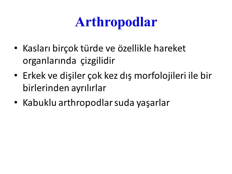 Arthropodlar Kasları birçok türde ve özellikle hareket organlarında çizgilidir Erkek ve dişiler çok kez dış morfolojileri ile bir birlerinden ayrılırl