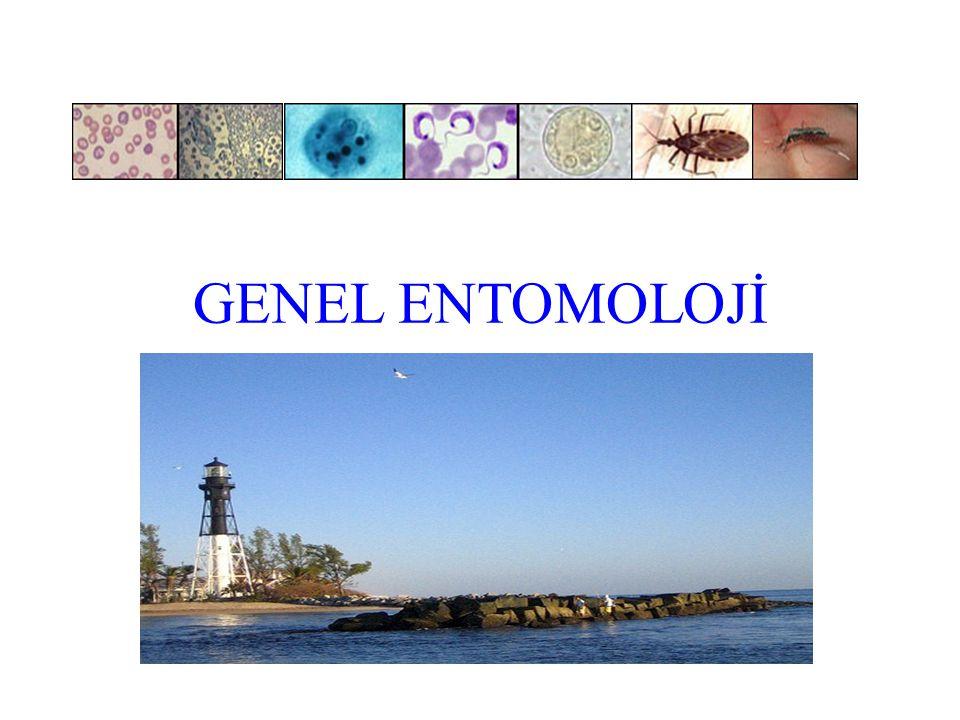 Entomoloji Entomon = böcek Logos= bilim Entomoloji artropodların yapısını, gelişmesini, yaşayışını ve ekolojik özelliklerini inceleyen bilim dalıdır Entomoloji zoolojinin bir dalıdır