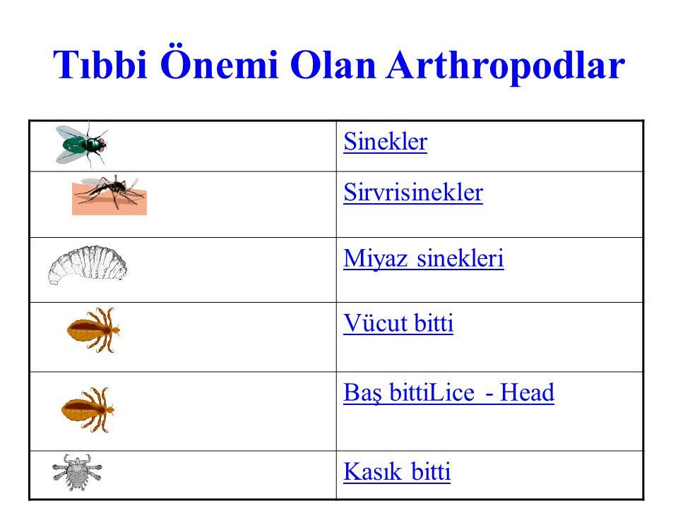 Tıbbi Önemi Olan Arthropodlar Sinekler Sirvrisinekler Miyaz sinekleri Vücut bitti Baş bittiLice - Head Kasık bitti
