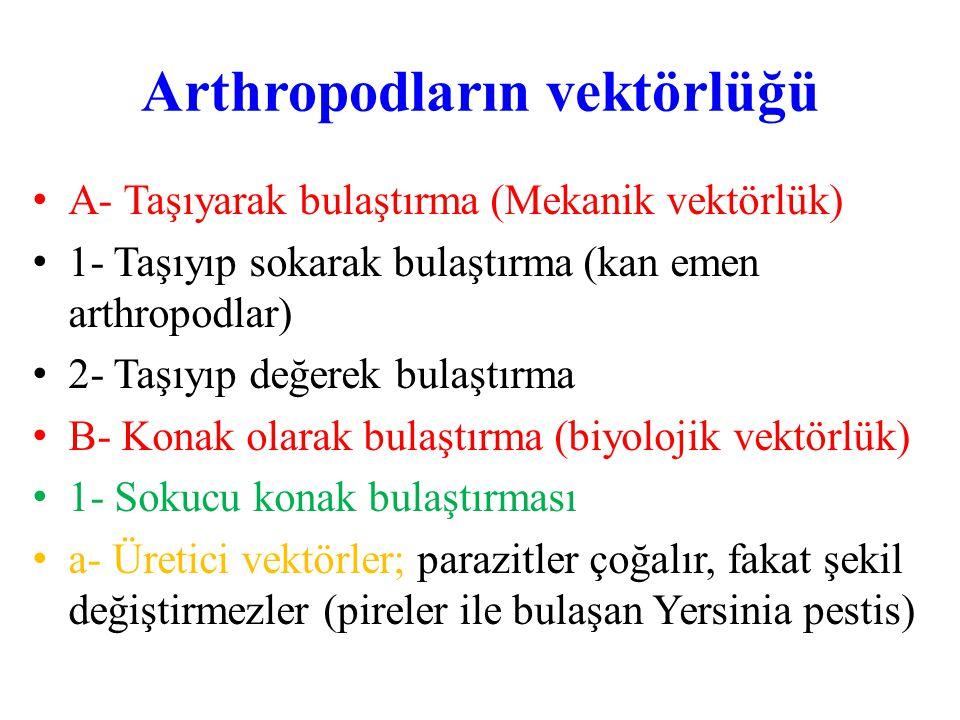 Arthropodların vektörlüğü A- Taşıyarak bulaştırma (Mekanik vektörlük) 1- Taşıyıp sokarak bulaştırma (kan emen arthropodlar) 2- Taşıyıp değerek bulaştı