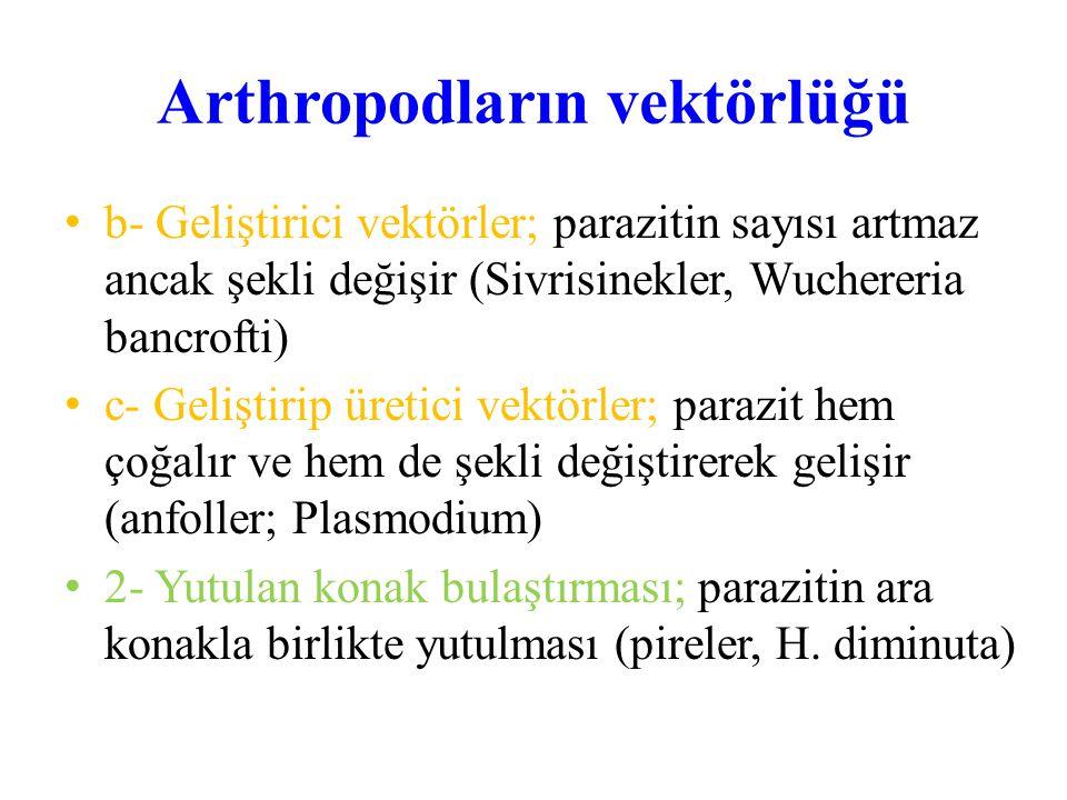 Arthropodların vektörlüğü b- Geliştirici vektörler; parazitin sayısı artmaz ancak şekli değişir (Sivrisinekler, Wuchereria bancrofti) c- Geliştirip ür