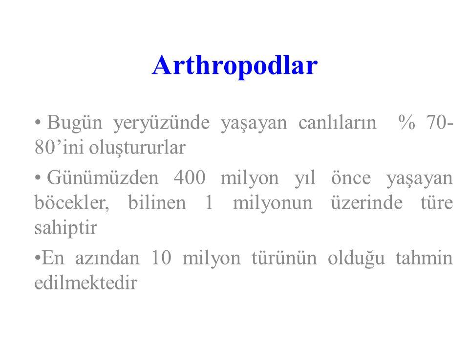 Arthropodlar Bugün yeryüzünde yaşayan canlıların % 70- 80'ini oluştururlar Günümüzden 400 milyon yıl önce yaşayan böcekler, bilinen 1 milyonun üzerind
