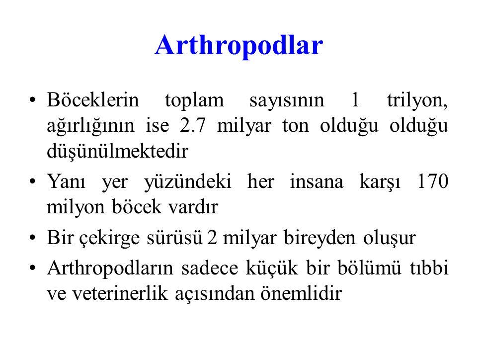 Arthropodlar Arthropodların Ön (kitin, ağız boşluğu, kaslı yutak, yemek borusu ve ön mide) Orta (mide olup kitinsizdir) Arka (kitinlidir) Olmak üzere üç kısımdan yapılmış tam bir sindirim borusu vardır