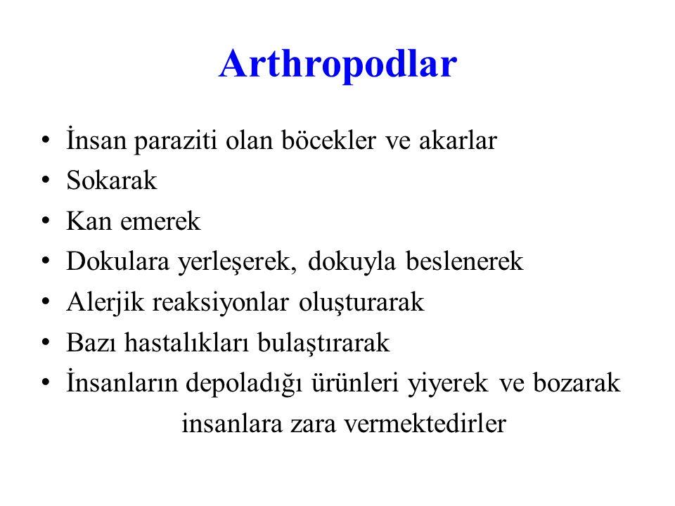 Arthropodlar İki yandan simetrili Sölomlu Çift çift bacakları Antenli (duyargalı) Ağız parçaları Omurgasız hayvanlar olup kendilerine özgü bir dış iskeletleri vardır Erkek ve dişileri çoğunlukla dış morfolojileri ile birbirlerinden ayrılırlar