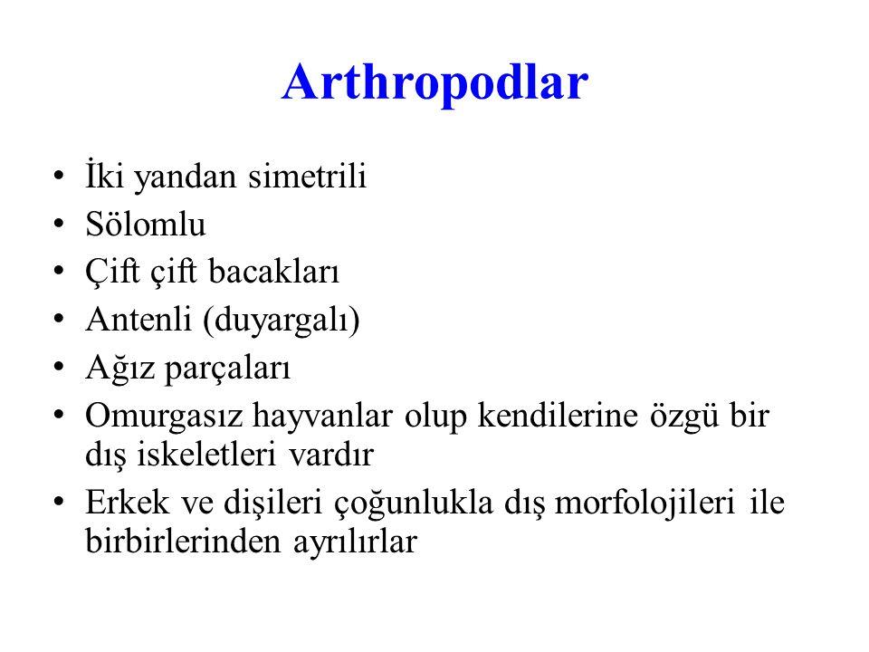 Arthropodlar Kasları birçok türde ve özellikle hareket organlarında çizgilidir Erkek ve dişiler çok kez dış morfolojileri ile bir birlerinden ayrılırlar Kabuklu arthropodlar suda yaşarlar