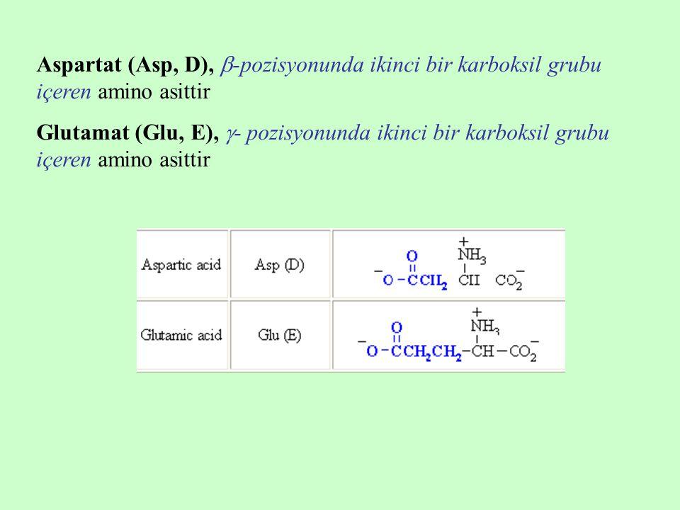 Aspartat (Asp, D),  -pozisyonunda ikinci bir karboksil grubu içeren amino asittir Glutamat (Glu, E),  - pozisyonunda ikinci bir karboksil grubu içeren amino asittir
