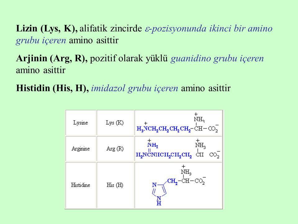 Lizin (Lys, K), alifatik zincirde  -pozisyonunda ikinci bir amino grubu içeren amino asittir Arjinin (Arg, R), pozitif olarak yüklü guanidino grubu i