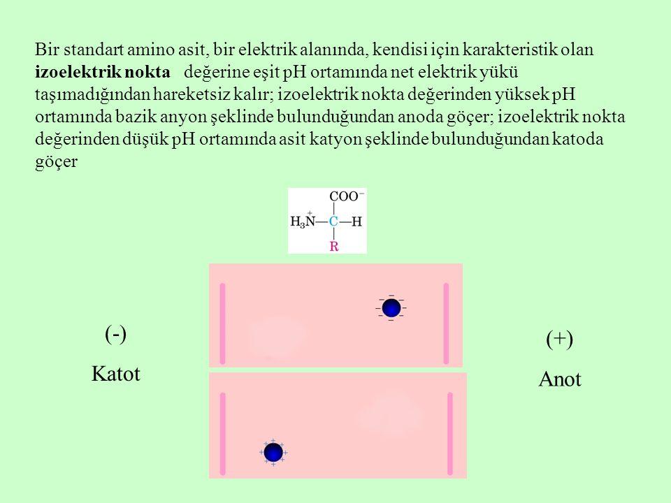 Bir standart amino asit, bir elektrik alanında, kendisi için karakteristik olan izoelektrik nokta değerine eşit pH ortamında net elektrik yükü taşımadığından hareketsiz kalır; izoelektrik nokta değerinden yüksek pH ortamında bazik anyon şeklinde bulunduğundan anoda göçer; izoelektrik nokta değerinden düşük pH ortamında asit katyon şeklinde bulunduğundan katoda göçer (-) Katot (+) Anot