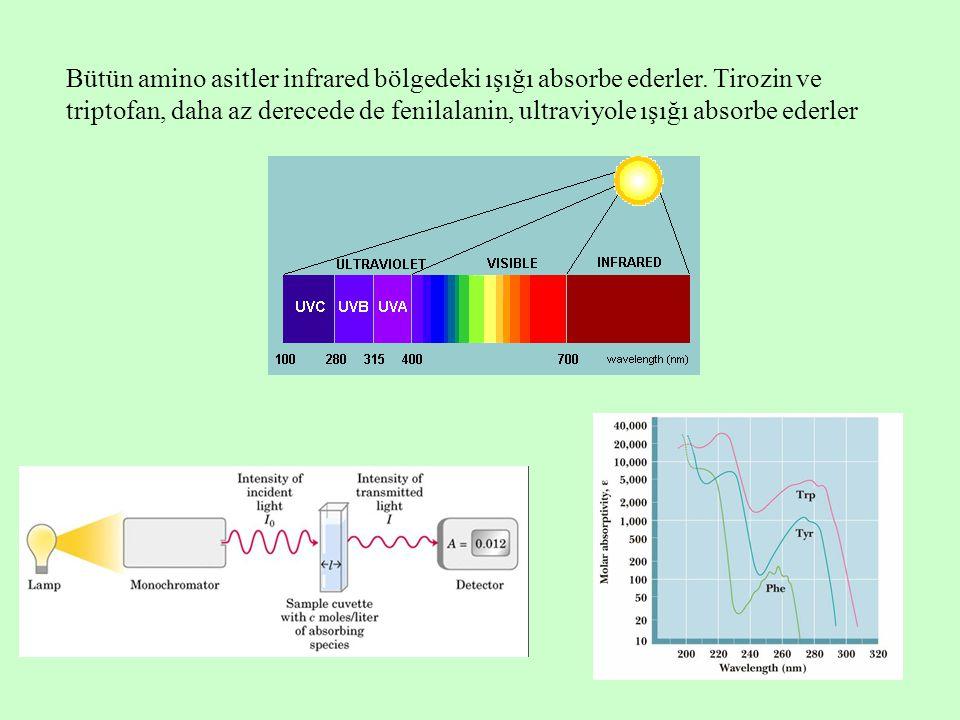 Bütün amino asitler infrared bölgedeki ışığı absorbe ederler. Tirozin ve triptofan, daha az derecede de fenilalanin, ultraviyole ışığı absorbe ederler