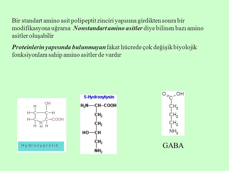 Standart amino asitler Standart amino asitler, aynı karbon atomuna bağlanmış bir amino grubu ve bir karboksil grubu içerirler Fizyolojik pH'da, amino asitlerin amino grubu proton taşır ve pozitif yüklüdür; karboksil grubundan ise proton ayrılmıştır ve negatif yüklüdür Standart amino asitler, üç harfli kısaltmalar ve tek harfli sembollerle gösterilirler