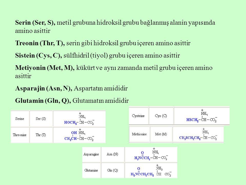 Serin (Ser, S), metil grubuna hidroksil grubu bağlanmış alanin yapısında amino asittir Treonin (Thr, T), serin gibi hidroksil grubu içeren amino asittir Sistein (Cys, C), sülfhidril (tiyol) grubu içeren amino asittir Metiyonin (Met, M), kükürt ve aynı zamanda metil grubu içeren amino asittir Asparajin (Asn, N), Aspartatın amididir Glutamin (Gln, Q), Glutamatın amididir