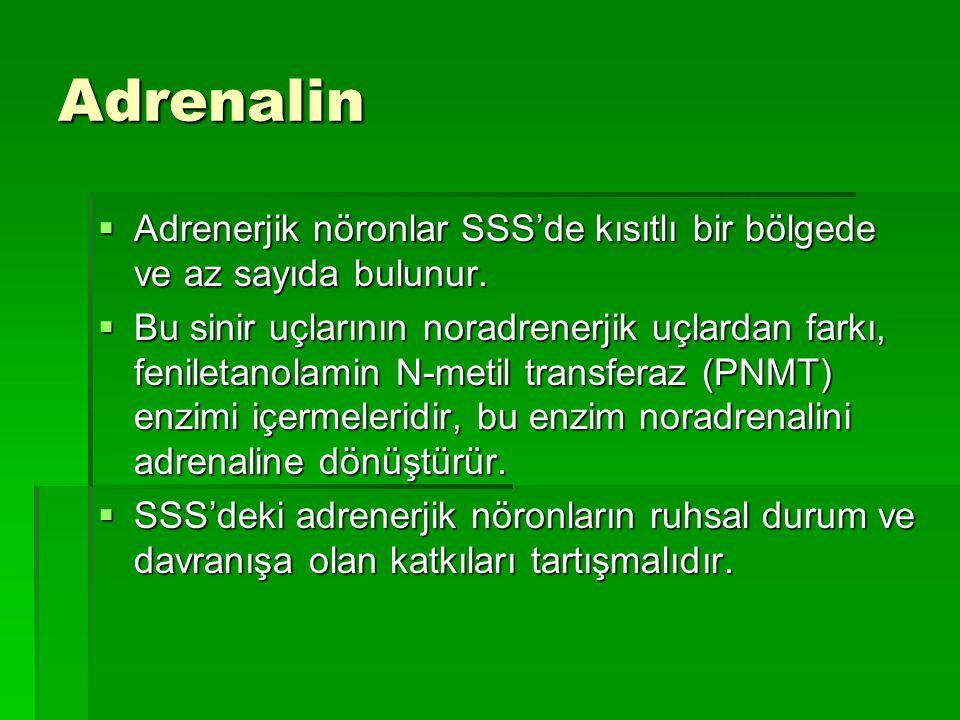 Adrenalin  Adrenerjik nöronlar SSS'de kısıtlı bir bölgede ve az sayıda bulunur.