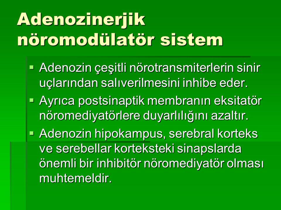 Adenozinerjik nöromodülatör sistem  Adenozin çeşitli nörotransmiterlerin sinir uçlarından salıverilmesini inhibe eder.