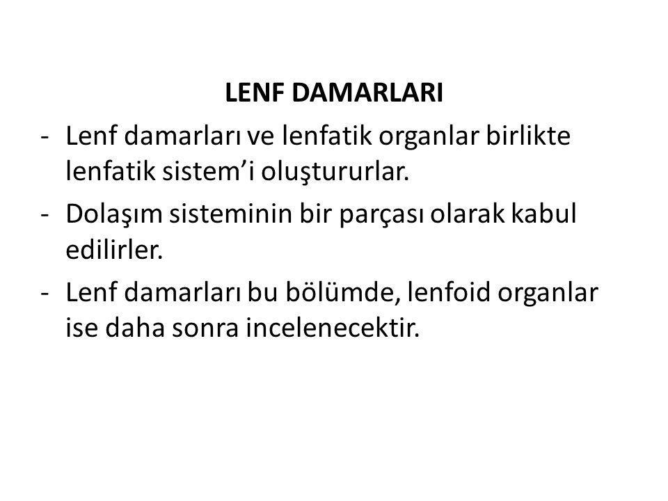 LENF DAMARLARI -Lenf damarları ve lenfatik organlar birlikte lenfatik sistem'i oluştururlar. -Dolaşım sisteminin bir parçası olarak kabul edilirler. -