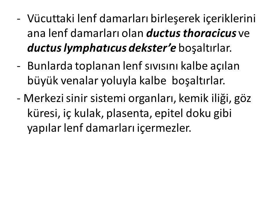 -Vücuttaki lenf damarları birleşerek içeriklerini ana lenf damarları olan ductus thoracicus ve ductus lymphatıcus dekster'e boşaltırlar. -Bunlarda top