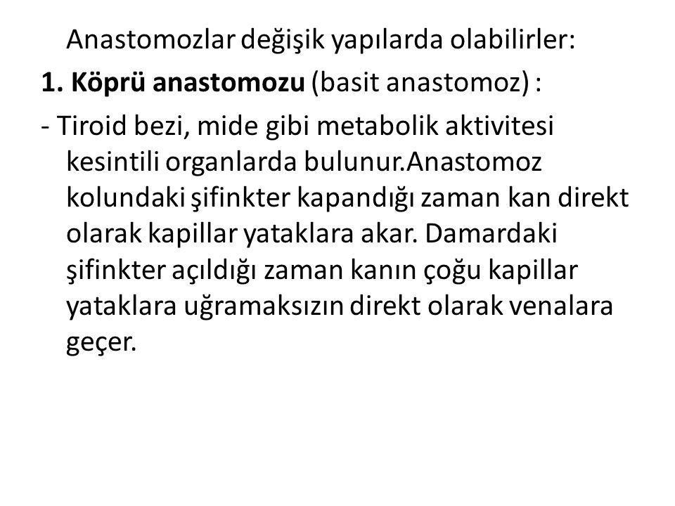 Anastomozlar değişik yapılarda olabilirler: 1. Köprü anastomozu (basit anastomoz) : - Tiroid bezi, mide gibi metabolik aktivitesi kesintili organlarda