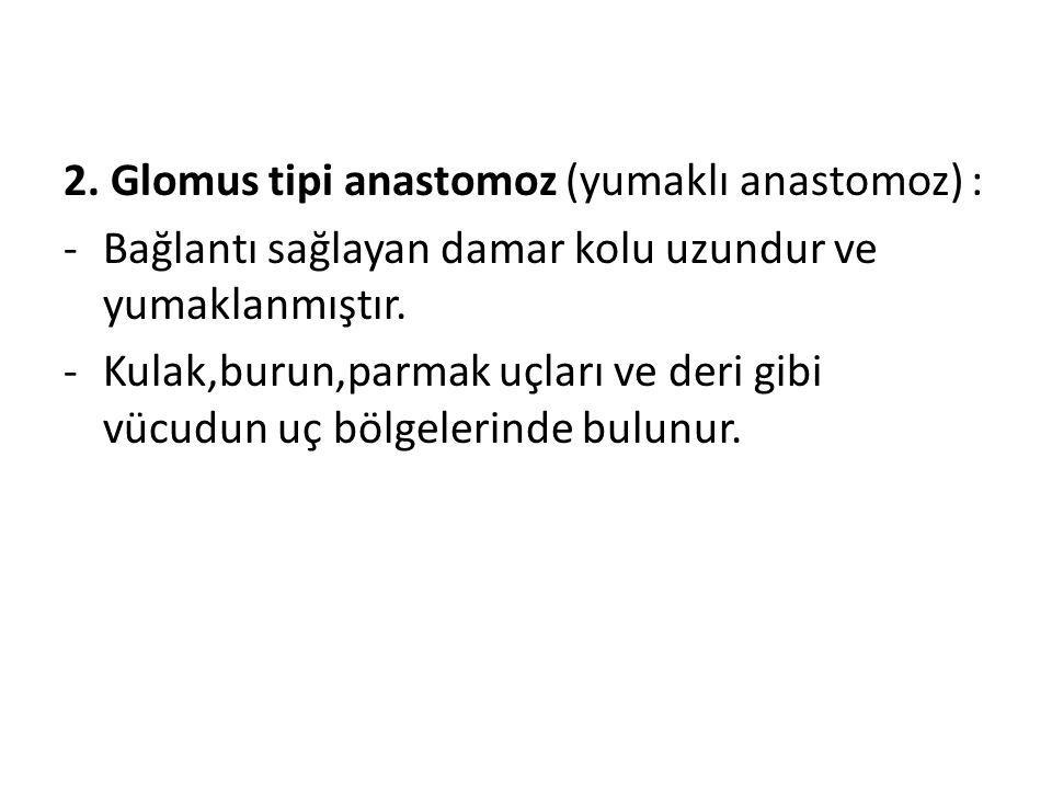 2. Glomus tipi anastomoz (yumaklı anastomoz) : -Bağlantı sağlayan damar kolu uzundur ve yumaklanmıştır. -Kulak,burun,parmak uçları ve deri gibi vücudu