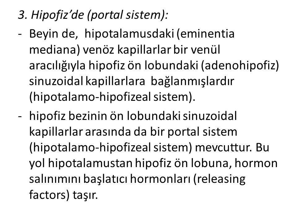 3. Hipofiz'de (portal sistem): -Beyin de, hipotalamusdaki (eminentia mediana) venöz kapillarlar bir venül aracılığıyla hipofiz ön lobundaki (adenohipo