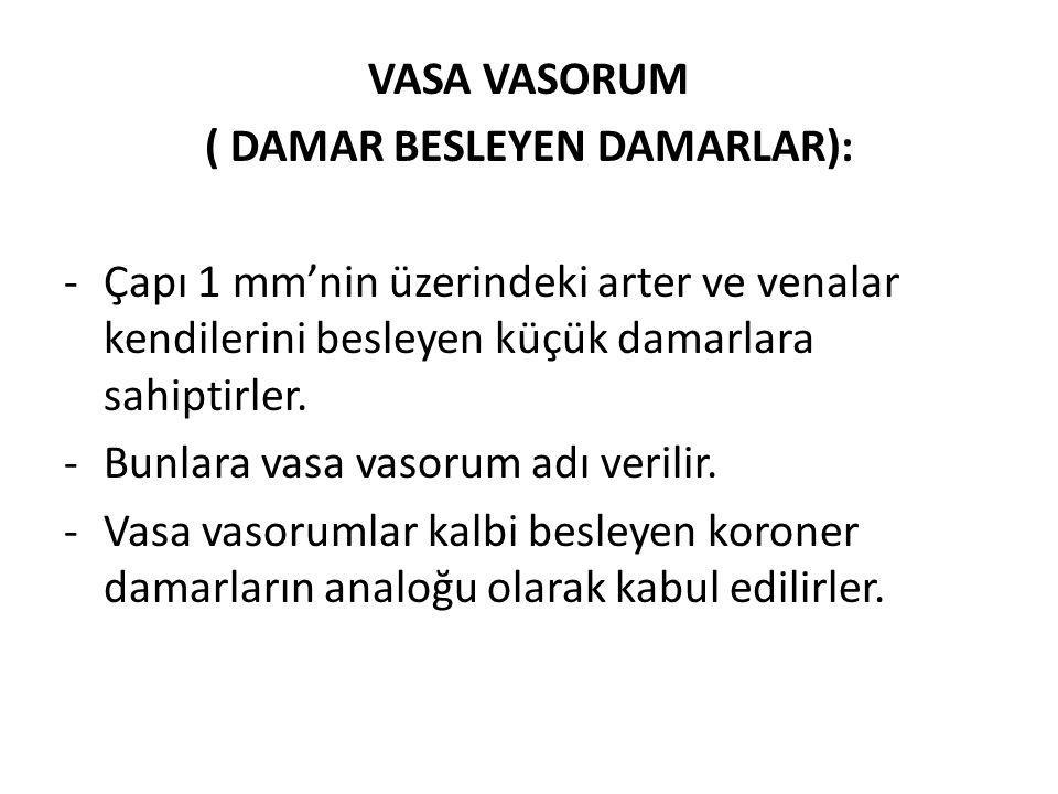 VASA VASORUM ( DAMAR BESLEYEN DAMARLAR): -Çapı 1 mm'nin üzerindeki arter ve venalar kendilerini besleyen küçük damarlara sahiptirler. -Bunlara vasa va