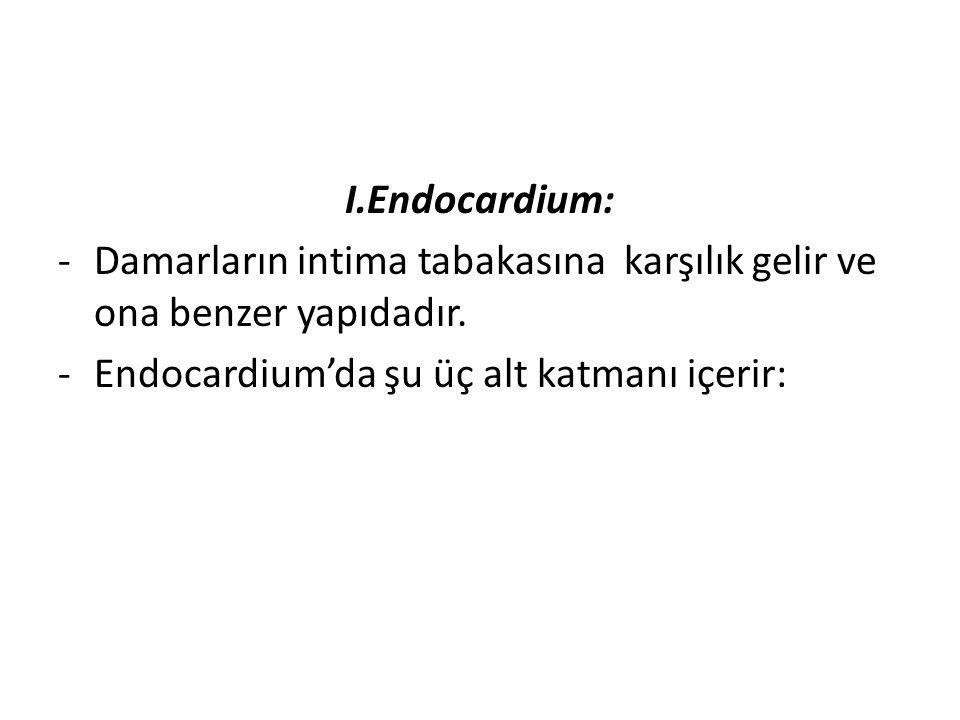 I.Endocardium: -Damarların intima tabakasına karşılık gelir ve ona benzer yapıdadır. -Endocardium'da şu üç alt katmanı içerir: