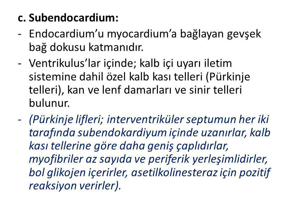 c. Subendocardium: -Endocardium'u myocardium'a bağlayan gevşek bağ dokusu katmanıdır. -Ventrikulus'lar içinde; kalb içi uyarı iletim sistemine dahil ö