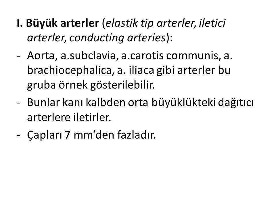 I. Büyük arterler (elastik tip arterler, iletici arterler, conducting arteries): -Aorta, a.subclavia, a.carotis communis, a. brachiocephalica, a. ilia