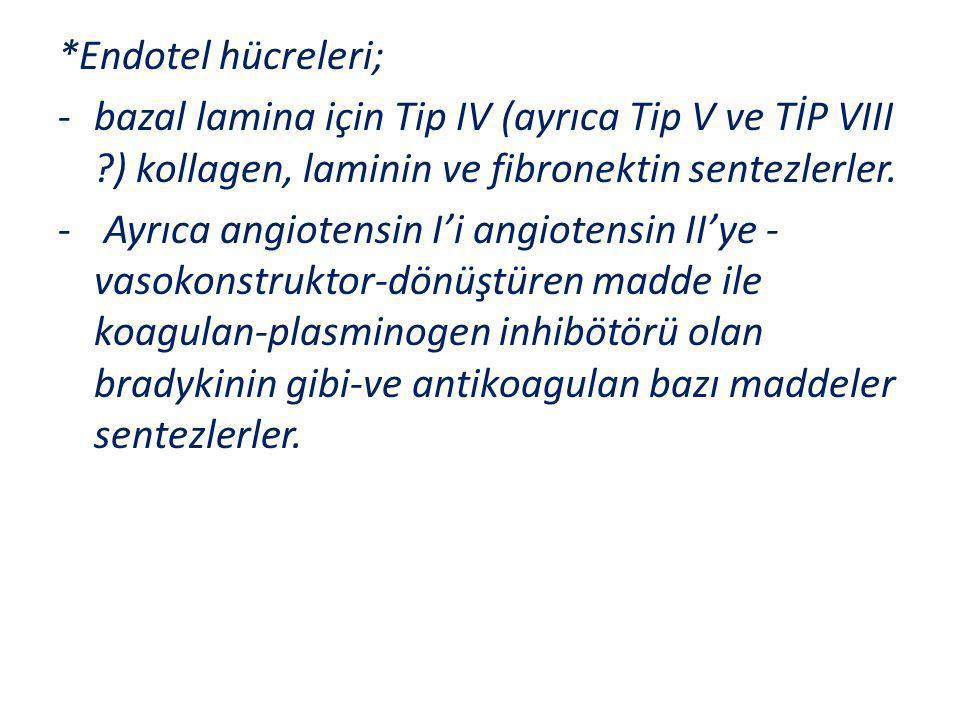 *Endotel hücreleri; -bazal lamina için Tip IV (ayrıca Tip V ve TİP VIII ?) kollagen, laminin ve fibronektin sentezlerler. - Ayrıca angiotensin I'i ang