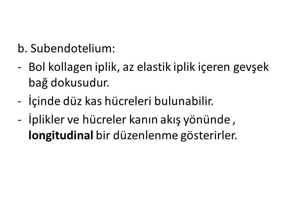 b. Subendotelium: -Bol kollagen iplik, az elastik iplik içeren gevşek bağ dokusudur. -İçinde düz kas hücreleri bulunabilir. -İplikler ve hücreler kanı