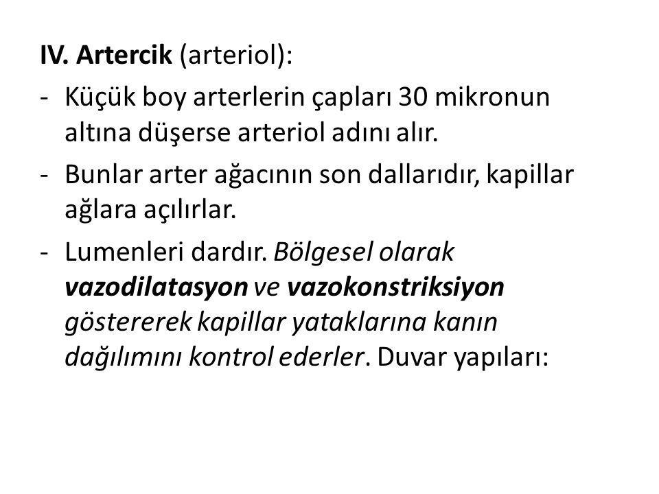 IV. Artercik (arteriol): -Küçük boy arterlerin çapları 30 mikronun altına düşerse arteriol adını alır. -Bunlar arter ağacının son dallarıdır, kapillar