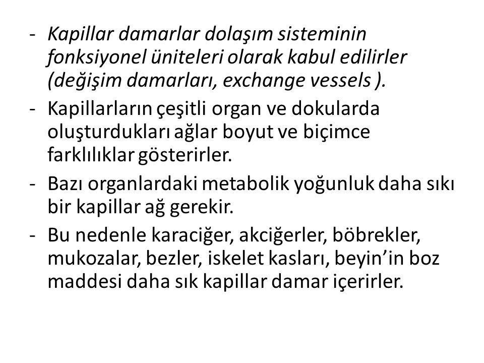 -Kapillar damarlar dolaşım sisteminin fonksiyonel üniteleri olarak kabul edilirler (değişim damarları, exchange vessels ). -Kapillarların çeşitli orga
