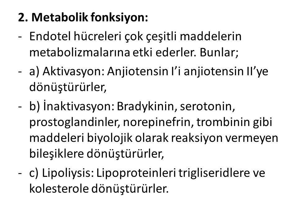 2. Metabolik fonksiyon: -Endotel hücreleri çok çeşitli maddelerin metabolizmalarına etki ederler. Bunlar; -a) Aktivasyon: Anjiotensin I'i anjiotensin