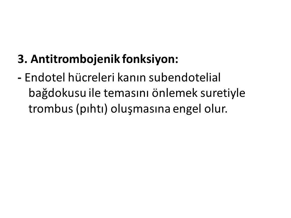 3. Antitrombojenik fonksiyon: - Endotel hücreleri kanın subendotelial bağdokusu ile temasını önlemek suretiyle trombus (pıhtı) oluşmasına engel olur.