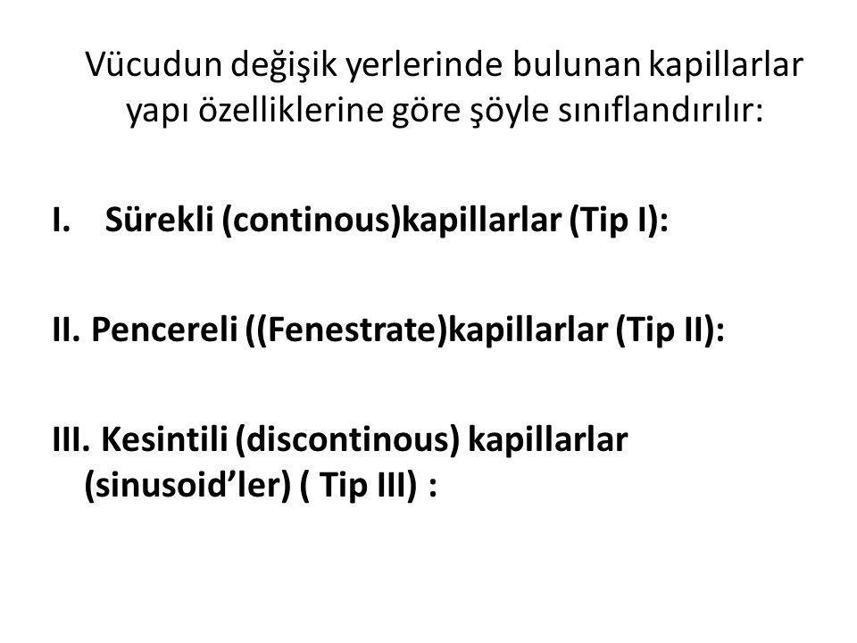 Vücudun değişik yerlerinde bulunan kapillarlar yapı özelliklerine göre şöyle sınıflandırılır: I.Sürekli (continous)kapillarlar (Tip I): II. Pencereli