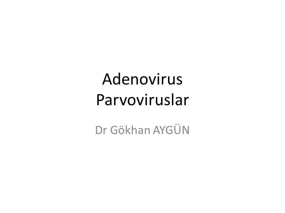 Klinik tablolar Akut solunum yolu enfeksiyonları Farenjit /Faringokonjunktival ateş Gastroenterit (tip 40,41) Konjunktivit Pnömoni Keratokonjunktivit Akut Hemorajik sistit Hepatit (infantlar, KC transplant hastalarında)