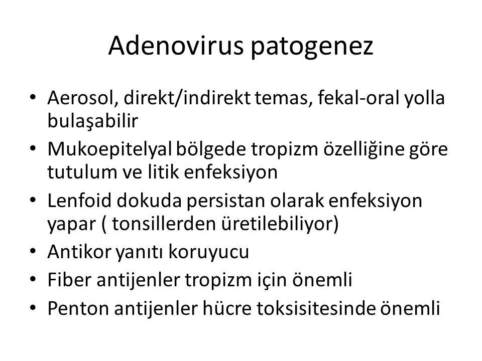 Adenovirus patogenez Aerosol, direkt/indirekt temas, fekal-oral yolla bulaşabilir Mukoepitelyal bölgede tropizm özelliğine göre tutulum ve litik enfek