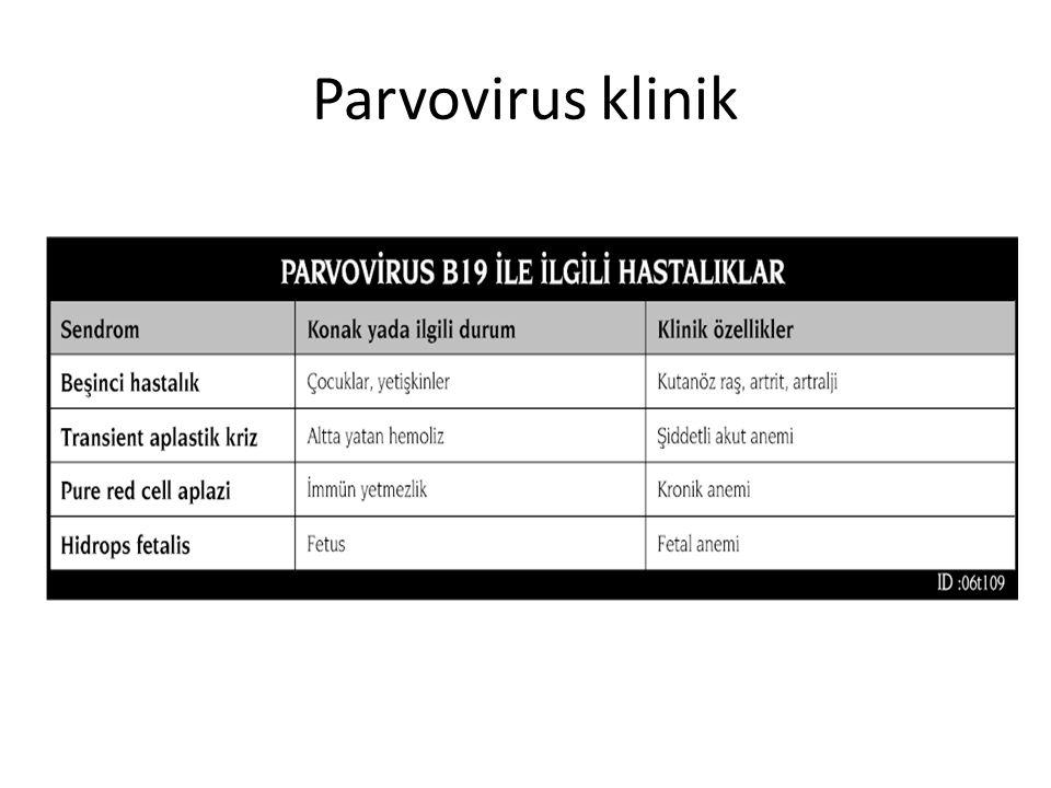 Parvovirus klinik