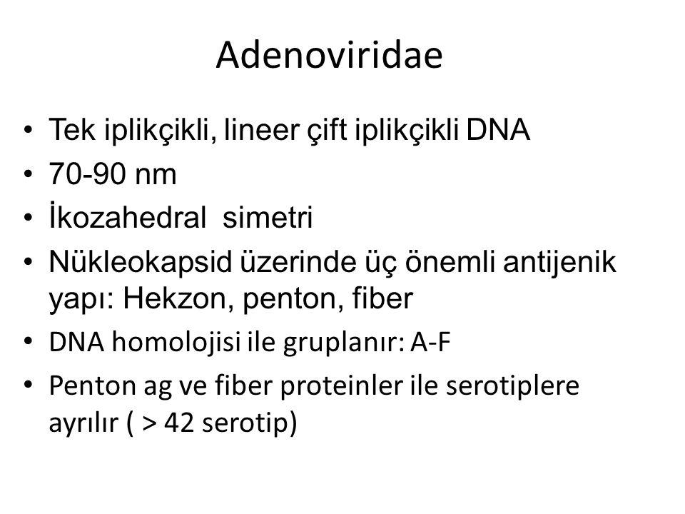 Adenoviridae Tek iplikçikli, lineer çift iplikçikli DNA 70-90 nm İkozahedral simetri Nükleokapsid üzerinde üç önemli antijenik yapı: Hekzon, penton, f